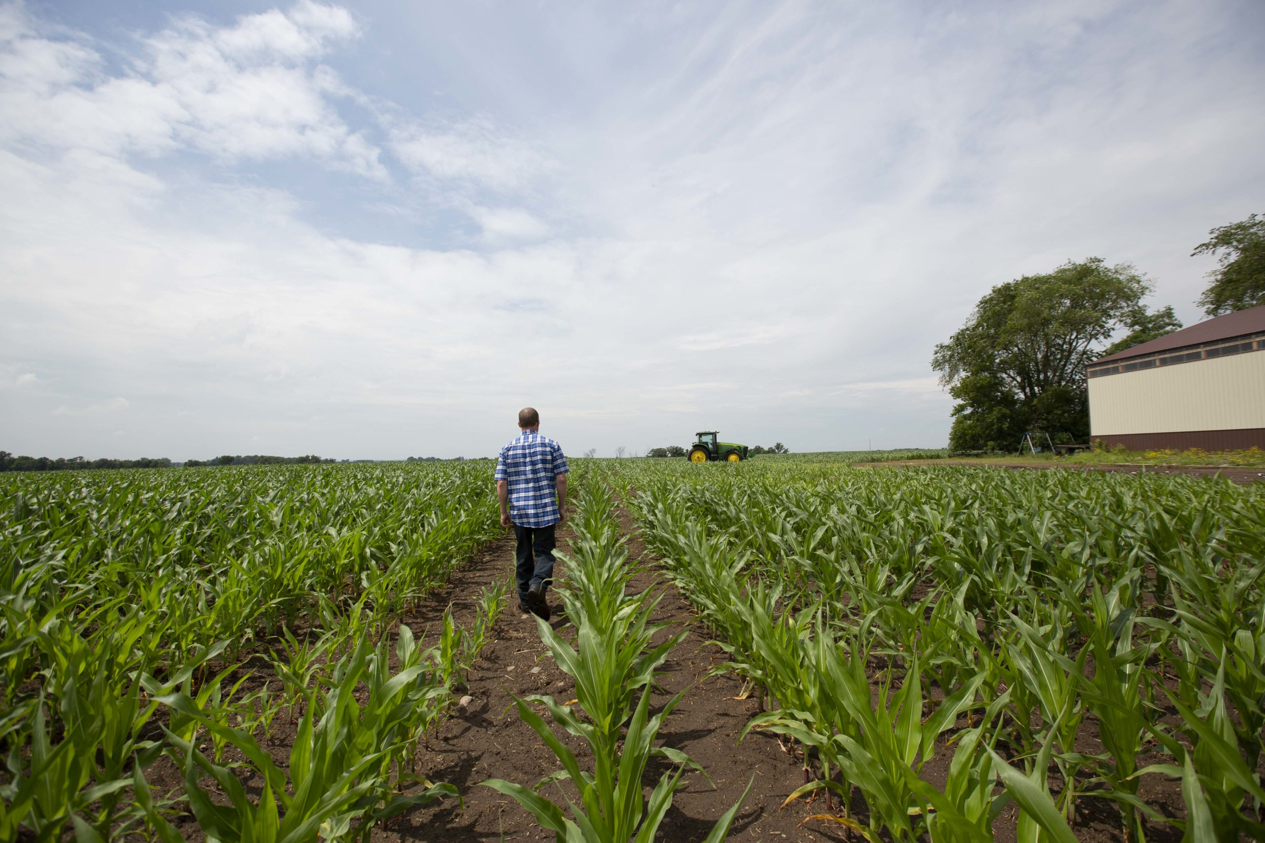 Farmer walking in corn field